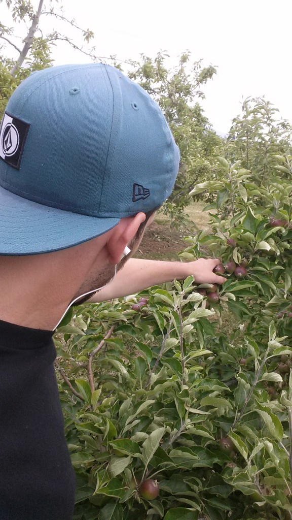 Fruitpicking_Neuseeland_ Apple_Orchard (2)
