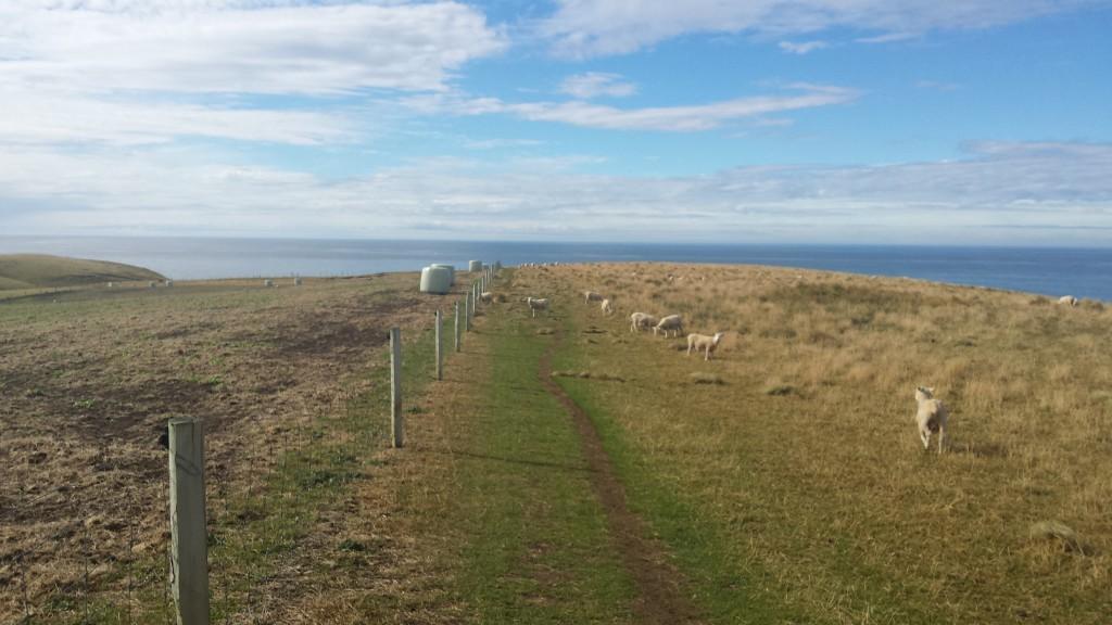 Reise_Südinsel_Neuseeland (2)