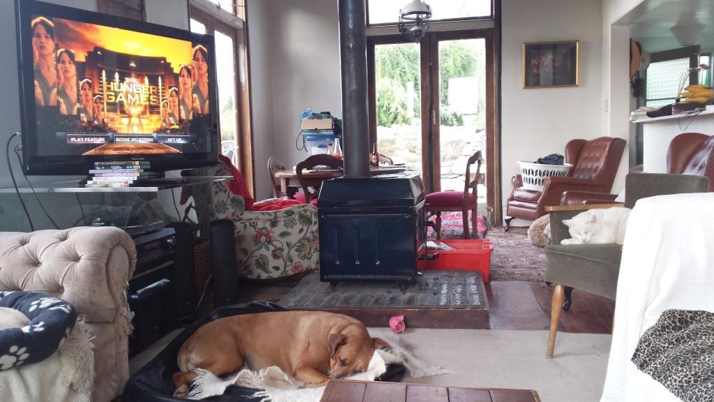 Das Wohnzimmer mit dem Hund und dem Fernseher