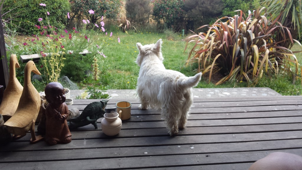 WWOOFing_Neuseeland_Hund